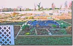 Resident-garden-plots-up-cl