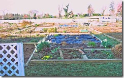 Resident-garden-plots-up-cl